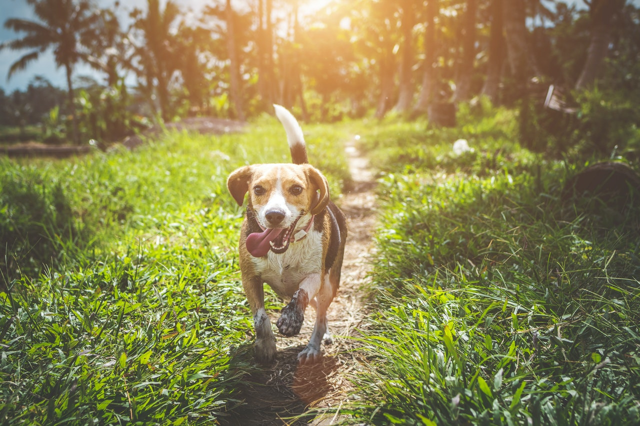 Recommendations to help those who think about buying dogs